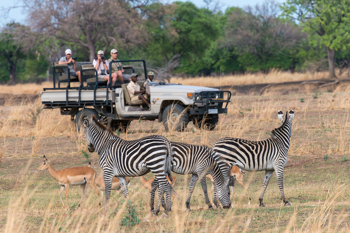 Zebras and Oribi spotted by guests of Remote Africa Safaris during a game drive through the South Luangwa National Park