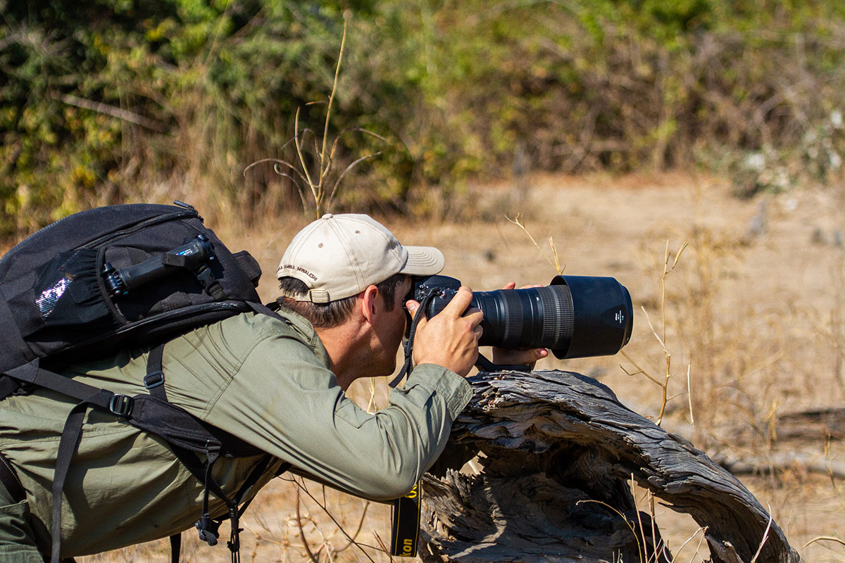 Nick Ridden from Remote Africa Safaris resting his camera on a dead tree truck as he lines up a photo during a walking safari in Zambia