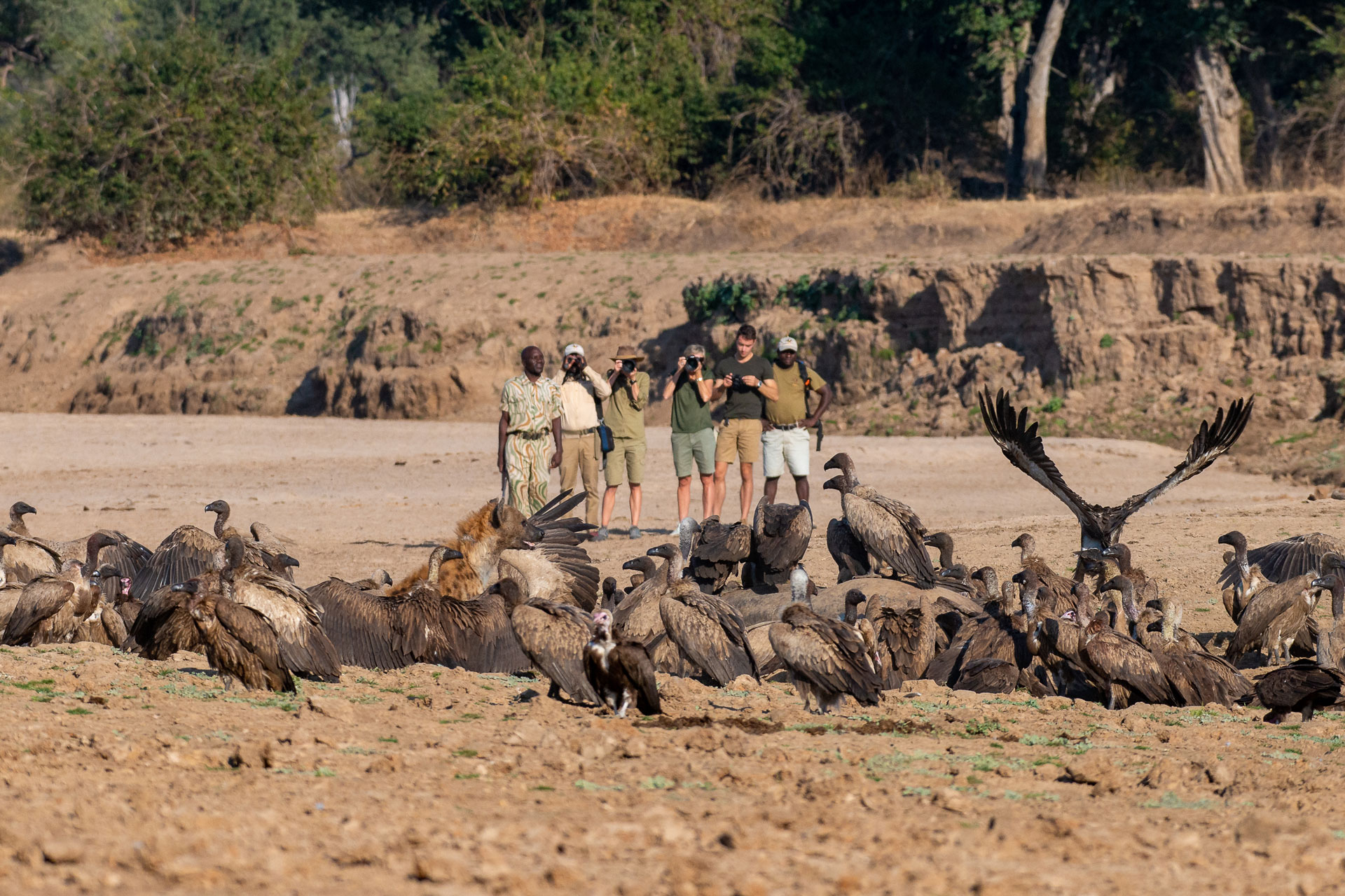 7 nights South & North Luangwa 2020