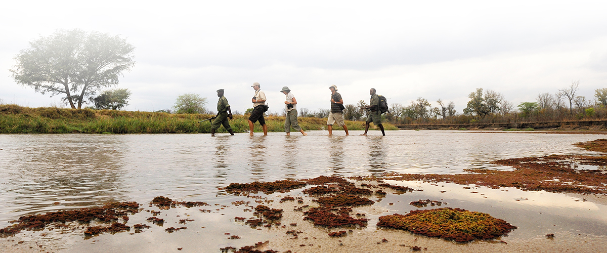 Guests of Remote Africa Safaris Mwaleshi Camp crossing the Mwaleshi River during a walking safari in the North Luangwa National Park