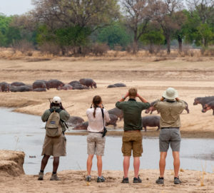 A group of safari guides viewing hippos across the Mwaleshi river in North Luangwa National Park, Zambia