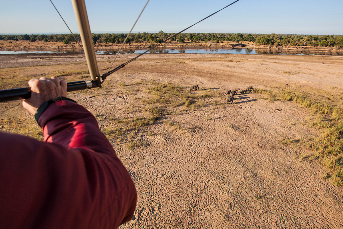 A view from within the Remote Africa Safaris Microlight, overlooking a group of elephants walking by the Luangwa River.