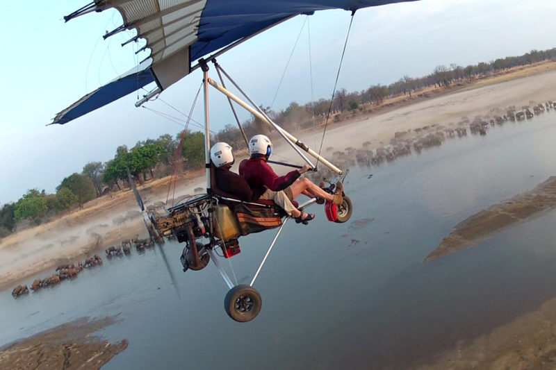 Remote Africa Safaris Microlight flying over pods of hippopotamus in the Luangwa river