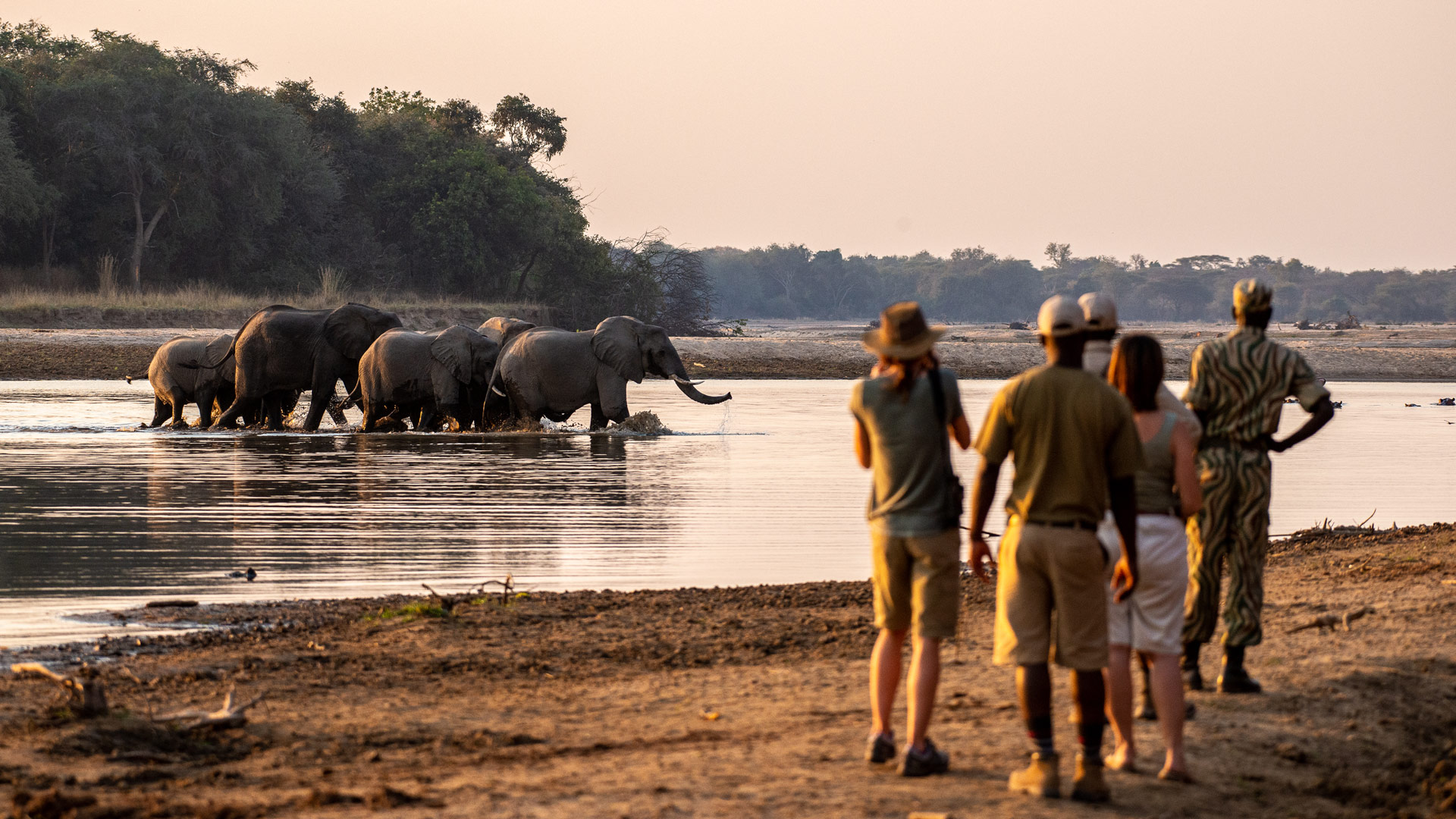 A heard of elephants crossing the Luangwa river in Zambia as a group of tourists and safari guides look on.