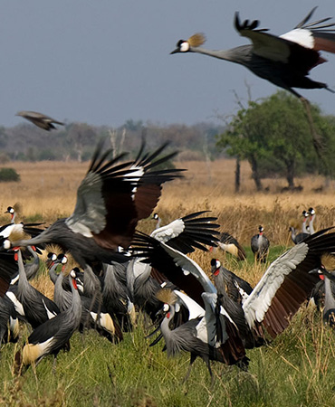 August in the Luangwa Valley