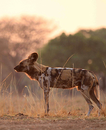July in the Luangwa Valley