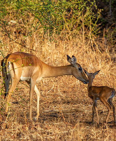 November in the Luangwa Valley