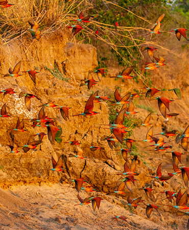 September in the Luangwa Valley